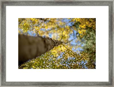 Daydreaming Framed Print by Aaron Aldrich