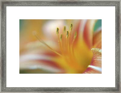 Daylily Abstract Framed Print by Anna Miller