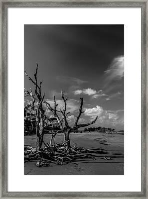 Dead Trees On The Beach Framed Print