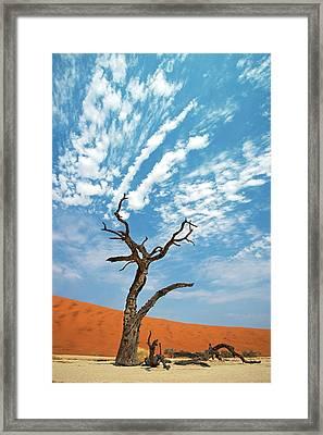 Dead Vlei In Namib-naukluft National Park Framed Print by Tony Camacho
