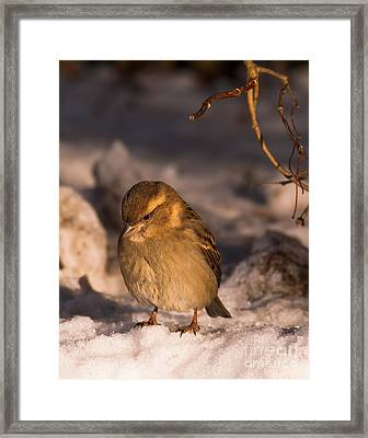 Framed Print featuring the photograph Deep In Thought by Rose-Maries Pictures