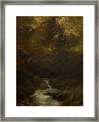 Deep Woods Framed Print by Tony Vassallo