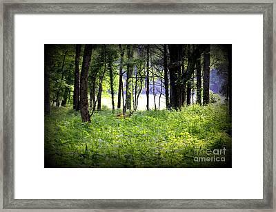 Deer Glade Framed Print