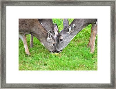 Deer Triplets Framed Print by Jeri lyn Chevalier