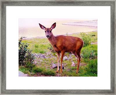 Deer Visit Framed Print by Cathy Long