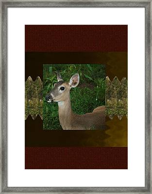 Deer Wild Animal Portrait For Wild Life Fan From Navinjoshi Costa Rica Collection Framed Print by Navin Joshi