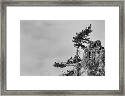 Defiant Framed Print by Davorin Mance