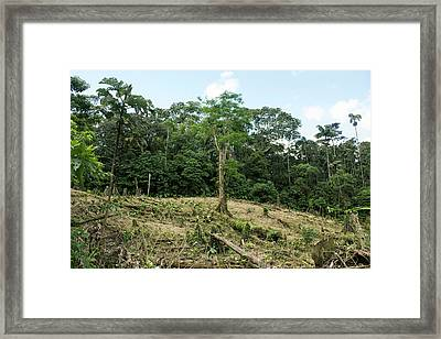 Deforestation In The Ecuadorian Amazon Framed Print by Dr Morley Read