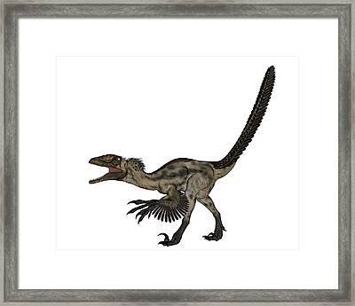Deinonychus Dinosaur Isolated On White Framed Print