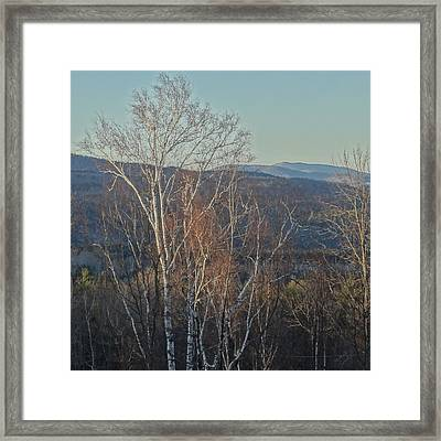 Delicate Framed Print by Catherine Arcolio