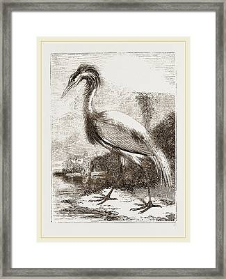 Demoiselle Framed Print by Litz Collection