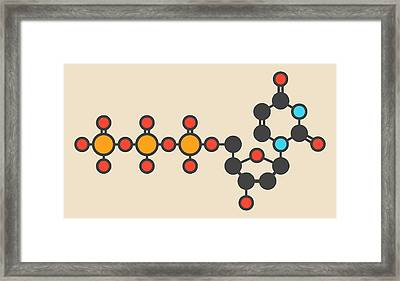 Deoxycytidine Molecule Framed Print by Molekuul