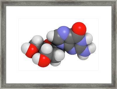 Deoxyguanosine Nucleoside Molecule Framed Print