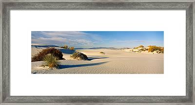 Desert Plants In A Desert, White Sands Framed Print by Panoramic Images