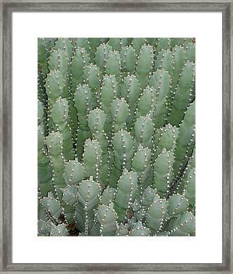 Desert Soldiers Framed Print