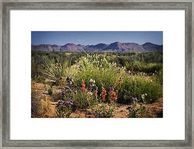 Desert Wildflowers Framed Print