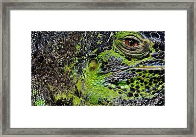 Details Iguana Framed Print by Werner Lehmann