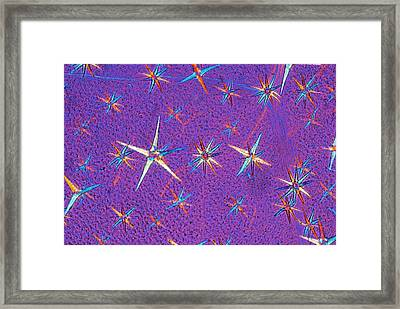 Deutzia Leaf Hairs Framed Print by Steve Lowry