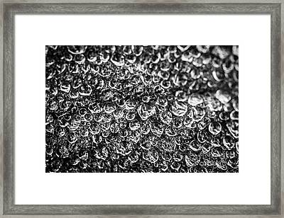 Dew Drops On Leaf Framed Print by Elena Elisseeva
