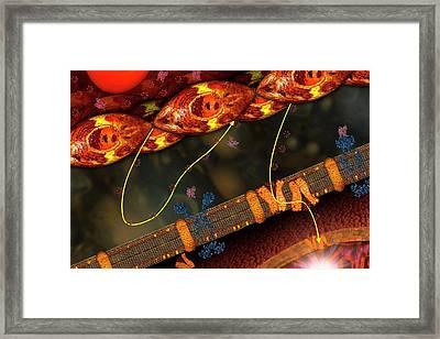 Diabetes Framed Print by Carol & Mike Werner