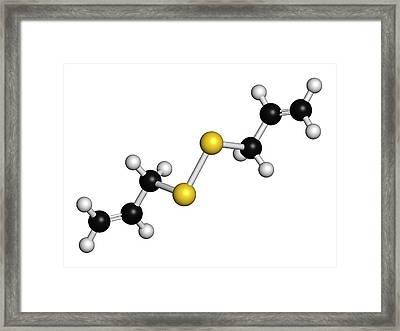 Diallyl Disulfide Garlic Molecule Framed Print