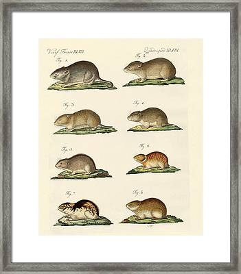 Different Kinds Of Mice Framed Print