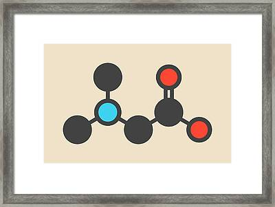 Dimethylglycine Molecule Framed Print