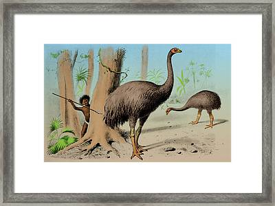 Dinornis, Giant Moa, Cenozoic Bird Framed Print