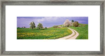 Dirt Road Through Meadow Of Dandelions Framed Print