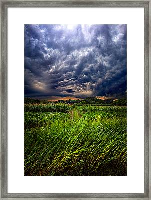 Disturbance Framed Print by Phil Koch