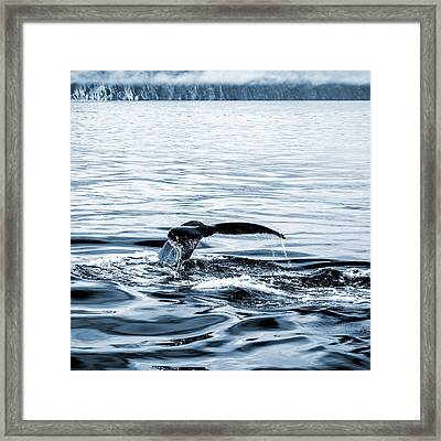 Dive Framed Print by Alexey Stiop