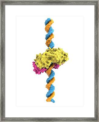 Dna Clamp And Dna Framed Print