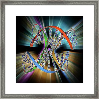 Dna Holliday Junction Framed Print by Laguna Design