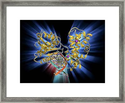 Dna Polymerase With Dna Framed Print