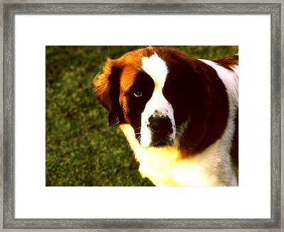 Dog Face Framed Print by Robert  Rodvik