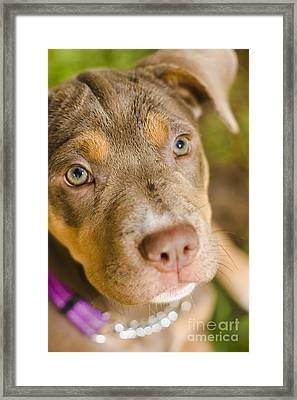 Dog Obedience Training Framed Print by Jorgo Photography - Wall Art Gallery