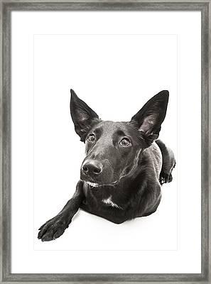 Dog Puppy  Framed Print by Donald  Erickson