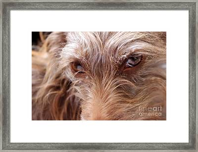 Dog Stare Framed Print