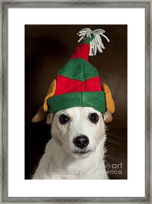 Dog Wearing Elf Ears, Christmas Portrait Framed Print by Jim Corwin