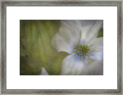 Dogwood Framed Print by Cindy Rubin