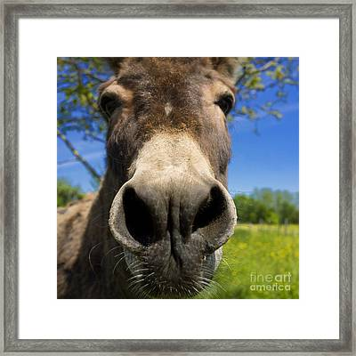 Donkey Framed Print by Bernard Jaubert