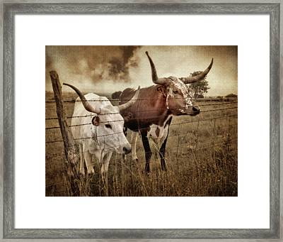 Texas Longhorns In Sepia Framed Print by David and Carol Kelly
