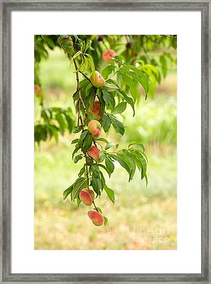Donut Peaches Framed Print