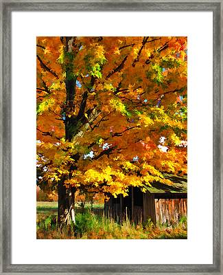 Door County Yellow Maple Migrant Shack Framed Print by Christopher Arndt