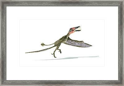 Dorygnathus Dinosaur Framed Print
