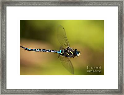 Dragonfly Framed Print by Sharon Talson