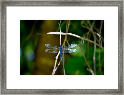 Dragonfly Framed Print by Tara Potts