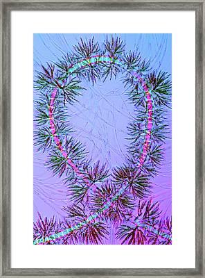 Draparnaldia Green Algae Framed Print by Marek Mis