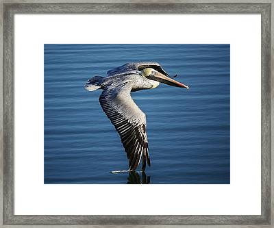 Drawing A Line In The Water Framed Print by Paulette Thomas