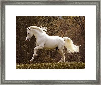 Dream Horse Framed Print by Melinda Hughes-Berland